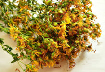 კრაზანა - ჯადოსნური მცენარე. ბედნიერების ჰორმონი ბევრი არასდროს არაა