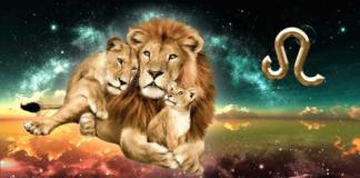 12 მიზეზი, რატომ არის ლომი საუკეთესო მშობელი და მეუღლე