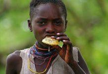 ველური აფრიკული ტომი ჰაძა ჩვენზე უფრო ჯანმრთელია. გაიგეთ, მათი დიეტის საიდუმლო